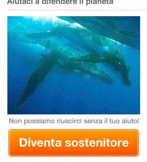 La vita minacciata delle balene, un indagine!