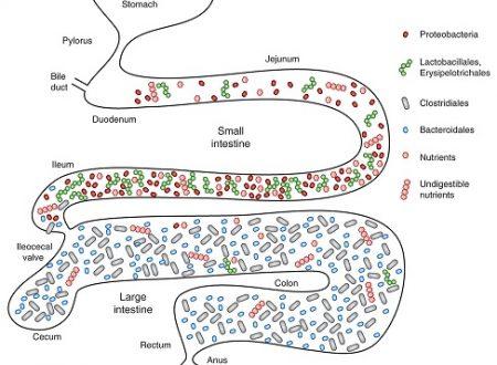 Con probiotici mirati si aiuta anche la depressione